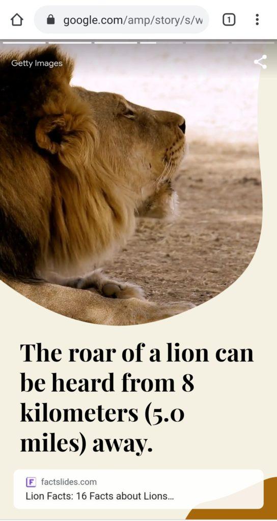 Screenshot di AMP Stories sui leoni