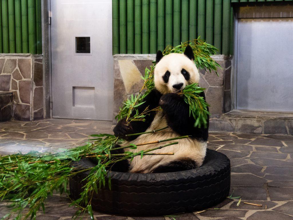 Google Panda. 10 anni fa ii lancio dell'algoritmo